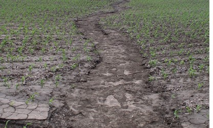 Corn field with no residuse and significant soil erosion. Can manure be part of the solution for the erosion in this photo?