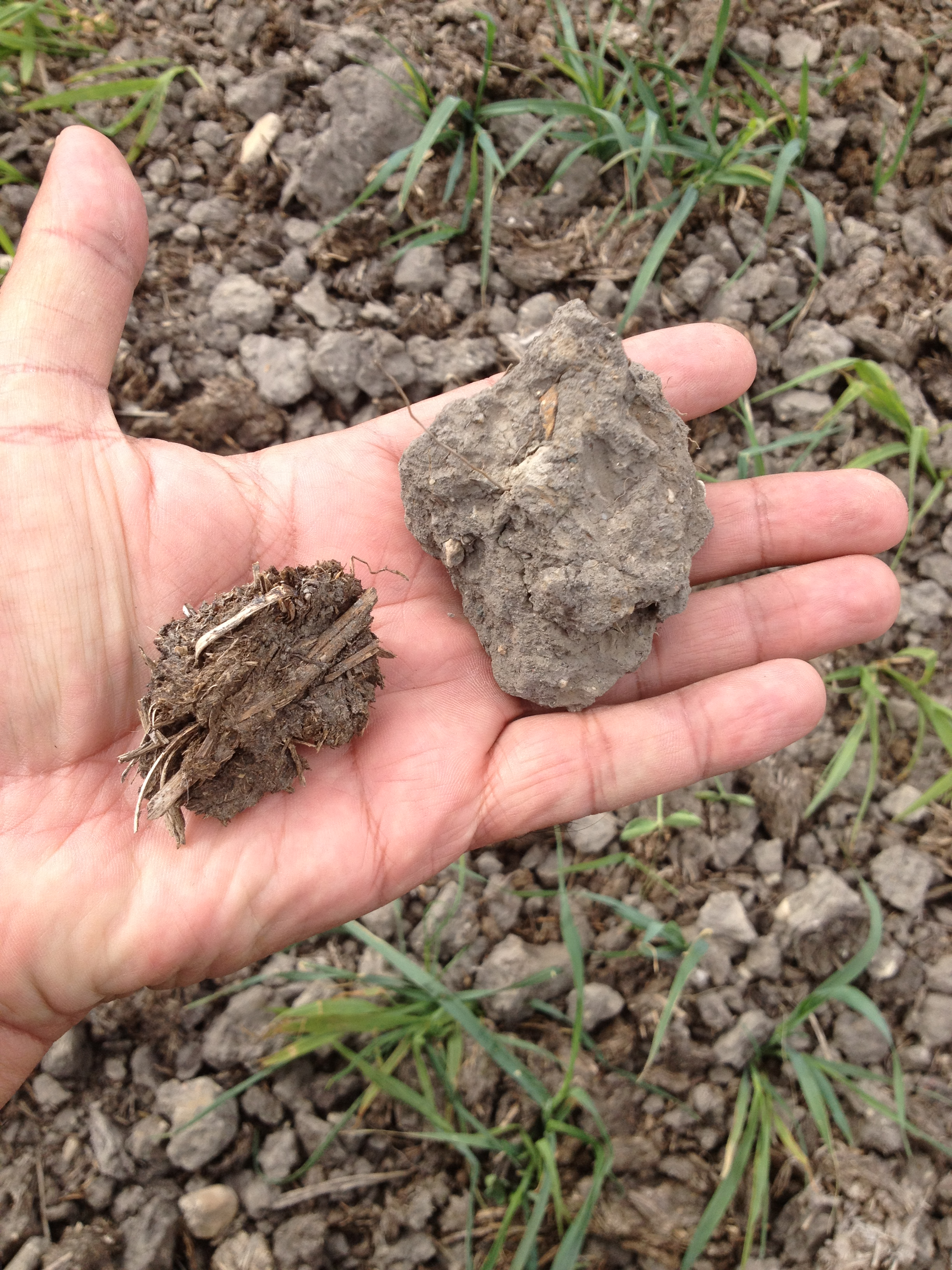 Soil organic matter and its benefits soil health nexus for Soil uses and its importance